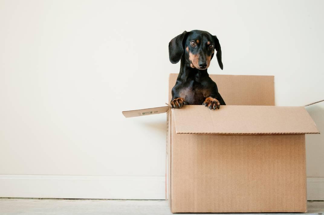 local moving company dog